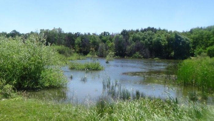 Екологічний моніторинг екосистеми «Коростовецькі ставки» продовжується