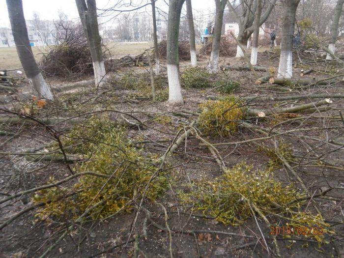Екологи перевіряли звернення з приводу обрізки   дерев в Ладижині