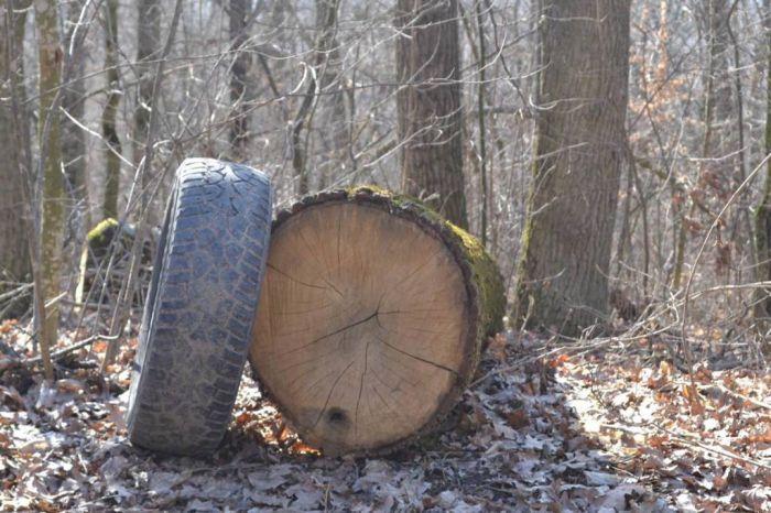 Поблизу національного заказника  відбувається масова вирубка дерев