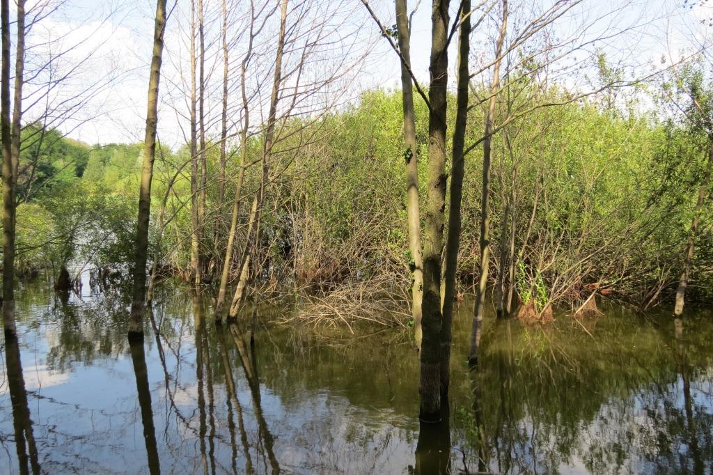 Моніторинг екосистеми «Коростовецькі ставки»