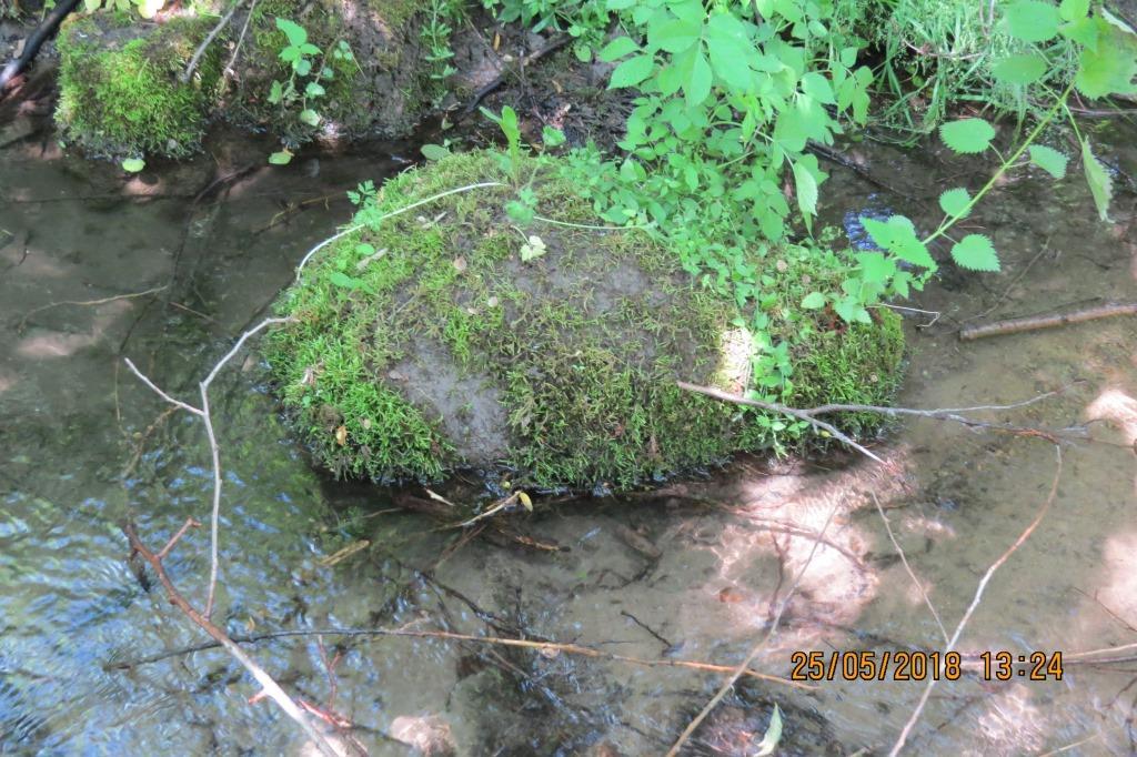 Квест   на «Зеленій Січі» може стати початком створення еко-парку в селі Лукашівка