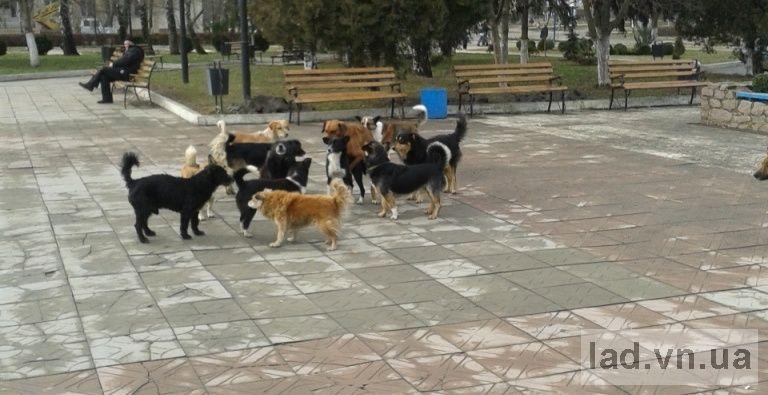 http//lad.vn.ua/uploads/images/foto/032_2.jpg