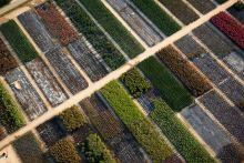 Чотири садові товариства планують об*єднатись